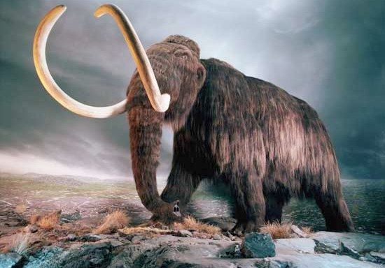 Cientficos anuncian que clonarn un mamut